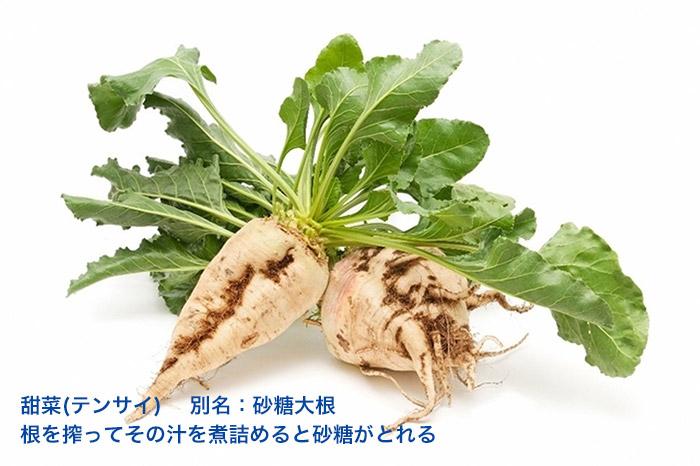 テンサイ 甜菜